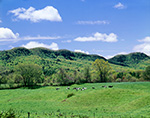 Holyoke Range and Dairy Cows in Spring, Hadley, MA