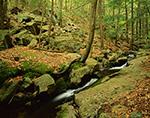 Small Stream on Mt. Tom, Holyoke, MA