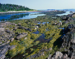 Rocks and Seaweeds in Tidal Zone at The Punchbowl on Jewell Island, Casco Bay, Cumberland/Portland, ME