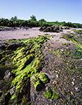 Seaweed and Rocks on Upper Flag Island, Maine Island National Wildlife Refuge, Outside Potts Harbor, Casco Bay, Harpswell, ME
