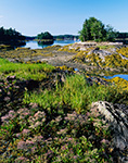 Heather, Grasses and Seaweed on Rocks along Shore of Ben Island in Quahog Bay near Snow Island, Casco Bay Region, Harpswell, ME