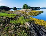 Heather, Grasses and Seaweed on Rocks along Shore of Ben Island in Quahog Bay near Snow Island, Casco Bay Region, Harpswell, ME