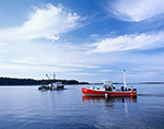 Commercial Boats in Cove at Cliff Island, Casco Bay, Portland, ME
