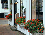 Impatiens in Bloom in Flower Boxes along Store Front, Downtown Nantucket, Nantucket Island, Nantucket, MA