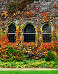 First Congregational Church with Ivy in Fall, Berkshires, Dalton, MA