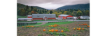 Green River Farms with Pumpkin Field in Fall, Berkshire Mountains, Wiliamstown, MA