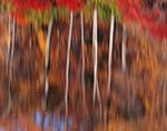 Abstract of Fall Foliage along Shoreline of Lake Skannatati, Harriman State Park, Tuxedo, NY
