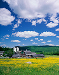 Farm with Field of Buttercups, White Mountains, Sugar Hill, NH