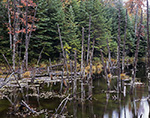 Wetlands in Lye Brook Wilderness in Early Fall, Green Mountain National Forest, Sunderland, VT