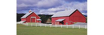 Red Horse Barns with White Fence in Late Summer at Cedar Grove Farm, Peacham, VT