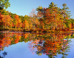Brilliant Fall Foliage of Red Maple Trees Reflecting in Still Waters of Harvard Pond, Petersham, MA