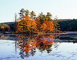 Red Maple Trees with Fall Foliage Reflecting in Still Waters of Harvard Pond, Petersham, MA