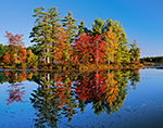 Red Maple and White Pine Trees in Fall Reflecting in Still Waters of Harvard Pond, Petersham, MA