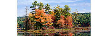 Trees with Fall Foliage Reflecting in Water of Harvard Pond, Petersham, MA