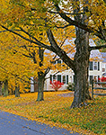 Country Home and Sugar Maples along South Road in Fall, Berkshire Mountains, Heath, MA