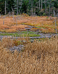 Marsh Wetlands in Green Mountain National Forest, Woodford, VT