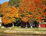 Red Colonial Home with Sugar Maples in Fall Foliage along the Connecticut River, Lyme, CT