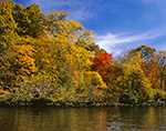 Fall Foliage along the Connecticut River at Seldon Neck State Park, Connecticut River, Lyme, CT