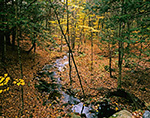 Gulf Brook in Fall, Athol, MA