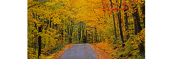 Country Road in Fall, Mt. Ascutney Auto Road, Mt. Ascutney State Park, Windsor, VT