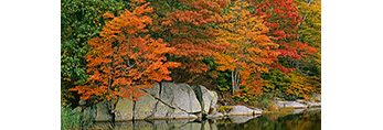 Fall Foliage and Boulders along Shore of Lord Cove, Connecticut River,  Old Lyme, CT