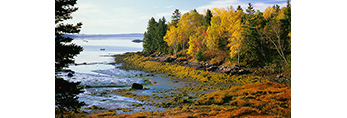 Maine Shoreline in Fall, Cobscook Bay State Park, ME