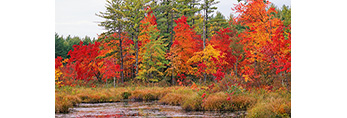 Wolf Brook with Marsh and Swamp in Fall, Brookline, NH