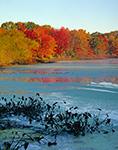 Duckweed and Fall Colors at Kickemuit Reservoir, Warren, RI