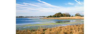 Goose Pond and Marsh, Chincoteague National Wildlife Refuge,  Assateague National Seashore, VA