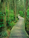 White Cedar Swamp Trail, Cape Cod National Seashore, Wellfleet, MA