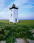 Long Point Light with Roses (Rosa rugosa) in Bloom, Cape Cod, Provincetown, MA