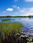 View of Somes Pond with Pondweeds and Rushes, Mt. Desert, ME