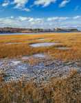 Salt Marsh and Ice near Cape Poge Bay and Tomo Neck, Chappaquiddick Island, Martha's Vineyard, MA
