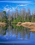 Prairie Reflections, Okefenokee National Wildlife Refuge, GA