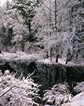 Snowy Woodlands and Reflections on Bow Brook, Quabbin Reservation, New Salem, MA