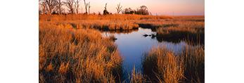 Salt Marsh in Late Light, Mouth of Delaware River/Delaware Bay,  Fairfield, NJ