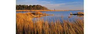 Marsh in Dividing Creek Wetlands, Delaware Bay, Downe, NJ