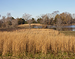 Sun-dried Grasses around Minton Lake in Early Winter, near Sylvania, Lonoke County, AR