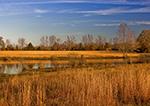 Golden Grasses around Minton Lake in Early Winter, near Sylvania, Lonoke County, AR