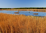 Marsh and Wetlands in Early Winter near Beulah, Prairie County, AR