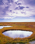 Salt Marsh and Pools, Lieutenant Island Area, Mass. Audubon Sanctuary, Cape Cod, Wellfleet, MA