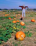 Scarecrow and Pumpkin Field, Cordova, MD