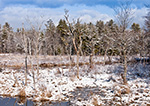Wetlands along Lawrence Brook after Fresh Snow, Royalston, MA