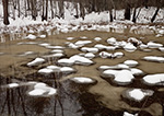 Snow and Ice in Wetlands adjacent to the Ashuelot River, Swanzey, NH