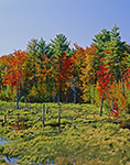 Marsh and Colorful Woodland Edge, Rindge, NH