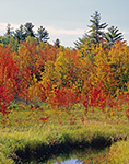 Marsh and Red Maple Swamp in Fall, Dublin, NH