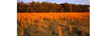 Hayfield in Late Afternoon Light near Oak Grove, AR