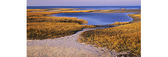Golden Salt Marsh and Mud Flats in Late Fall, Paines Creek Beach,  Cape Cod, Brewster, MA