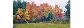 Bur Reed and Woodland Edge in Fall, Templeton, MA