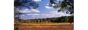 Field and Forest in Fall at Great Meadows National Wildlife Refuge, Sudbury, MA